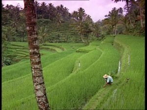 540895670-terrace-landscape-cultivation-of-rice-bali-farmer